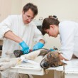 Veterinarian makes surgery - Stock Photo