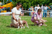 Dog show — Stock Photo