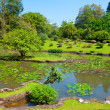 Botanical Garden landscape — Stock Photo