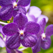 ������, ������: Flowering orchids