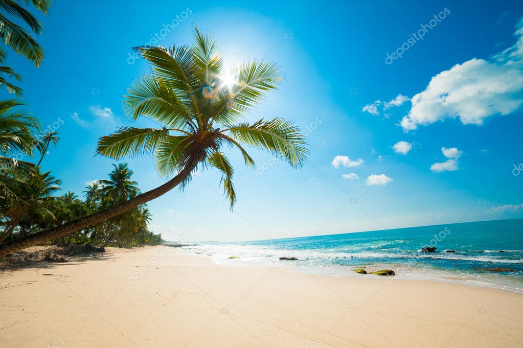 берег камни пальмы shore stones palm trees  № 792096 без смс
