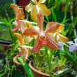 Flowering orchids - 