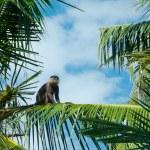 Monkey sitting on a palm — Stock Photo