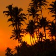 Beautiful tropical sunset — Stock Photo
