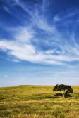 The Lone Tree — Stock Photo