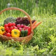Stock Photo: Fresh organic vegetables outdoor