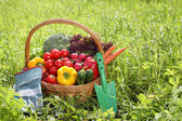 Fresh organic vegetables outdoor — Stock Photo