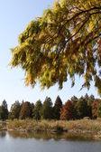 Fall lake leaves — Stock Photo