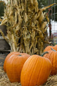 Time to pick your pumpking — Stock Photo