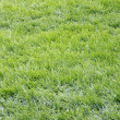 Green grass — Stock Photo #10779192