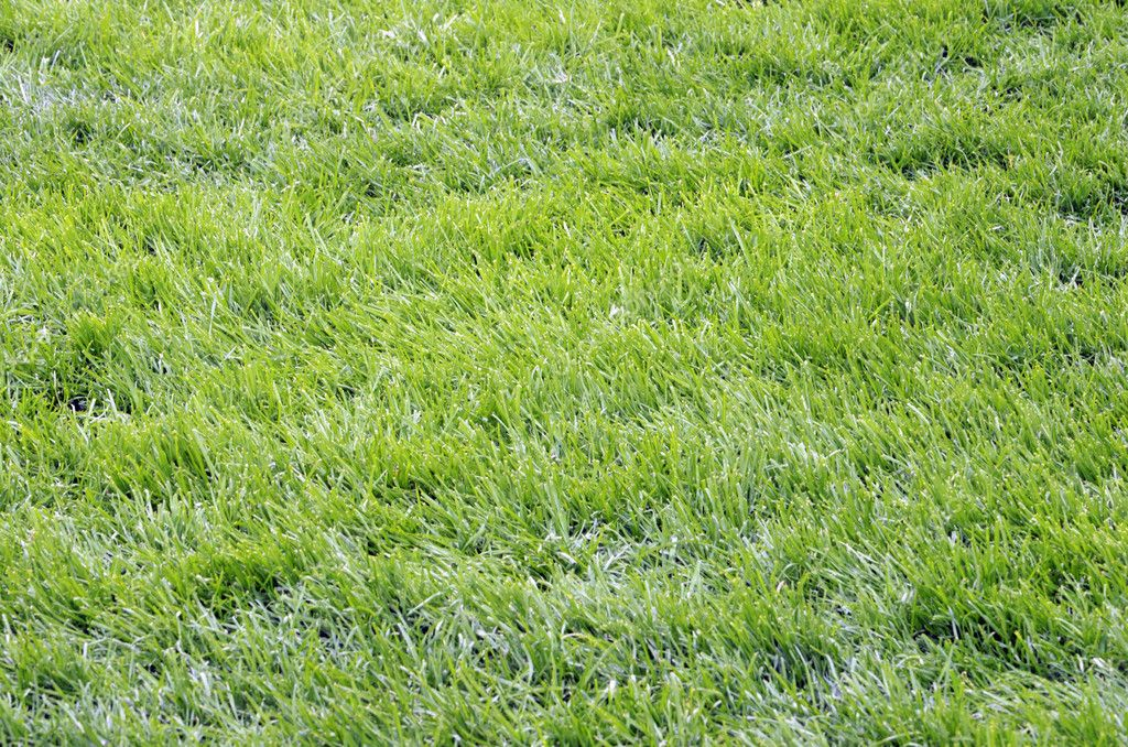 Green grass in the football field — Stok fotoğraf #10779192