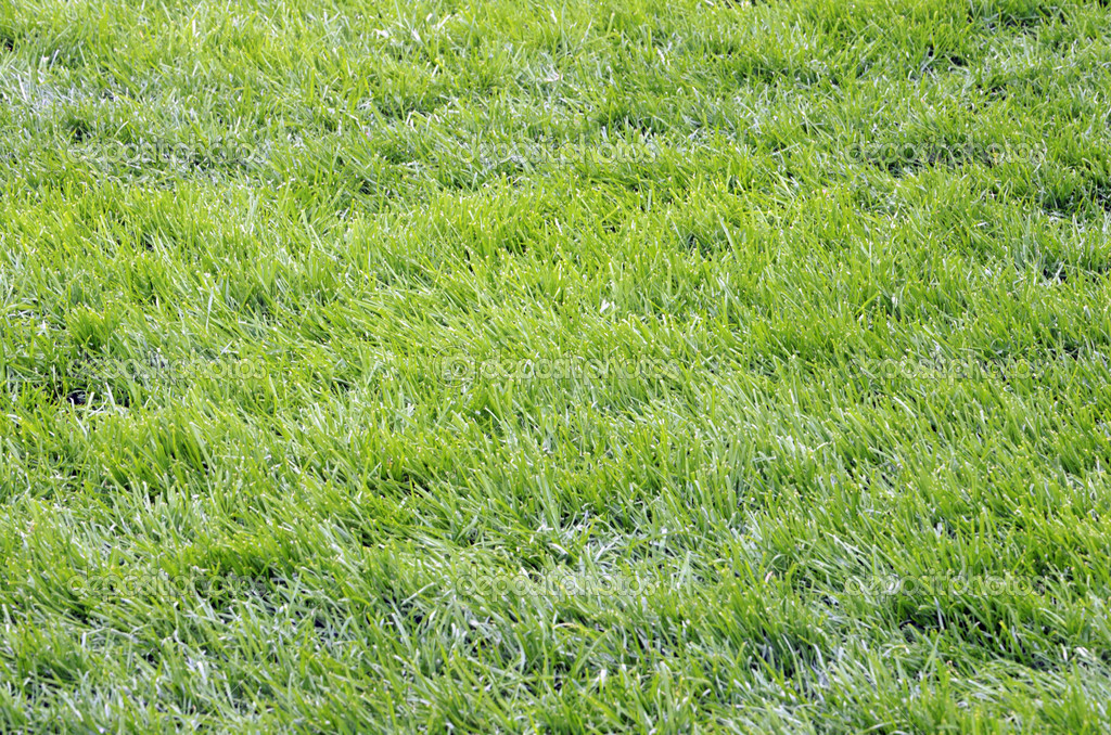 Green grass in the football field — Stockfoto #10779192