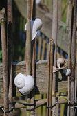 Tuinhekpoort decoratie — Stockfoto