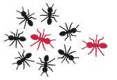 Toy Ants — Stock Photo