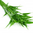 Decorative bamboo leaf — Stock Photo
