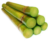 Bunch of fresh sugar cane — Stock Photo