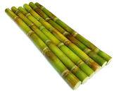 Bunch of fresh sugar cane — Stock Photo