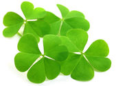 Decorative clover leaves — Stock Photo
