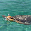Big Turtle under water in Karibic sea — Stock Photo #11543362