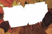 叶中的空白卡 — 图库照片