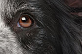 Close-up dog eye — Stock Photo