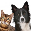 Stock Photo: Dog and Cat