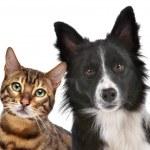 köpek ve kedi — Stok fotoğraf