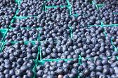 Sea of Blueberries — Stock Photo