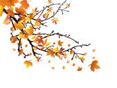 Autumn branch — Stock Vector