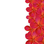 Pink Frangipani With Border — Stock Vector