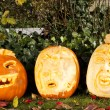 Halloween pumpkins — Stock Photo #11640308
