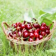 Fresh Cherries in Basket — Stock Photo