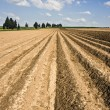 Landscape with agricultural field — Stock Photo