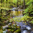 Stock Photo: Slow Moving Creek and Fall Leaves