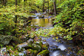 Slow Moving Creek and Fall Leaves — Stock Photo