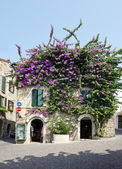 Bougainvillea Flowers at Sirmione Town — Stock Photo