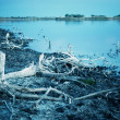 Dead trees and lake — Stock Photo