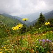 Flowers in summer mountains - Stock Photo