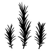Herbes romarin isolés sur blanc — Vecteur