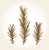 Retro stylized rosemary stub isolated on white — Stock Vector