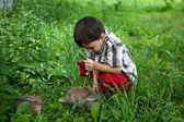 Boy fed rabbits in the garden by hand — Stock Photo