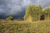 Stormy summer landscape — Stock Photo