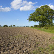 Fallow field — Stock Photo