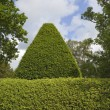 Stock Photo: Topiary background