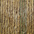 Straw bale close up — Stockfoto