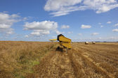 Harvest scene — Stock Photo