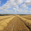 Stubble fields — Stock Photo
