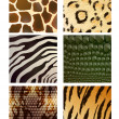 Stock Vector: Vector Set of Different Animal Skins
