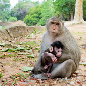 Monkey with its baby — Stock Photo