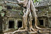 Giant tree covering Ta Prom temple, Siem Reap, Cambodia — Stock Photo